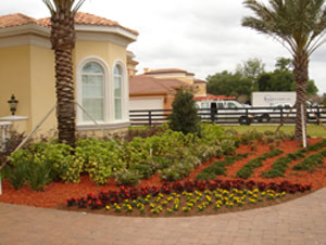 Landscape design for tampa clearwater plant city dade for Landscape design tampa