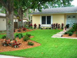 Landscaping in Tampa